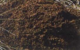 自動車廃油を吸着したACライトを草地へ投入。