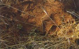 投入後、3ケ月でACライトの中にカタバミが生えている。